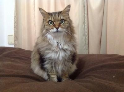毎日お世話をしていた猫ちゃんとの再会
